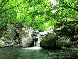 レンジャー(自然案内人)と行く、爽やか夏の川俣渓谷の湧水巡り