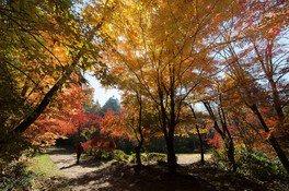城山公園の紅葉