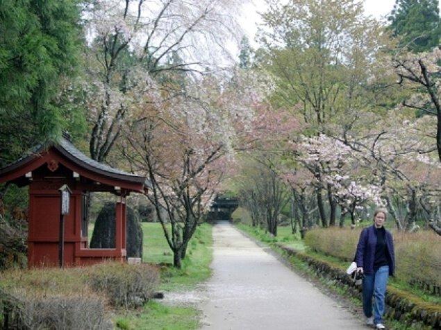 【桜・見ごろ】含満公園・化地蔵