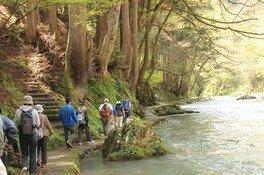 森と川の遊歩道ウォーキング