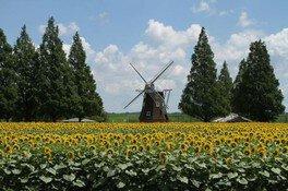 あけぼの山農業公園 ひまわりウィーク