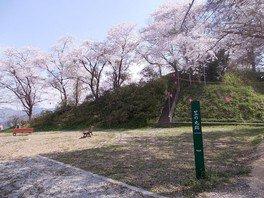 神武山公園の桜