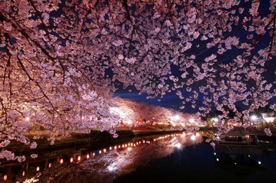 上沼公園・下沼公園の桜
