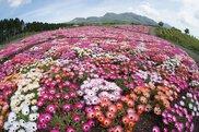 春の七色花祭り