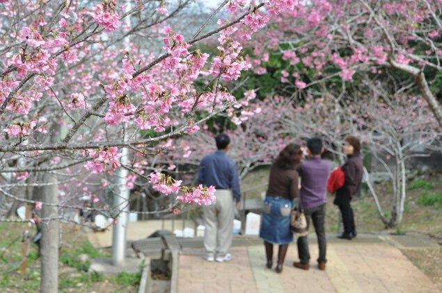 八重瀬公園の桜
