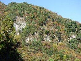 竜ヶ岳の紅葉