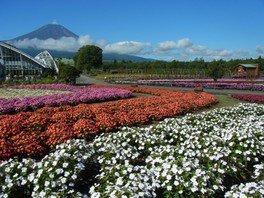 花の都公園 夏の清風