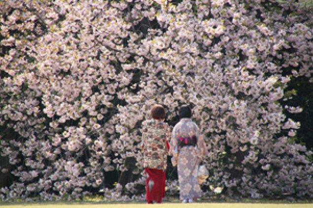 【桜・見ごろ】新宿御苑<中止となりました>