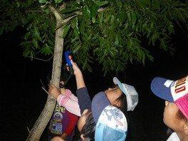 ヤックス自然学校「第42回サマーキャンプ:カブトムシキャンプ」