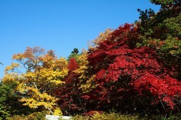 層雲峡(紅葉谷)の紅葉