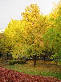 保土ケ谷公園の紅葉