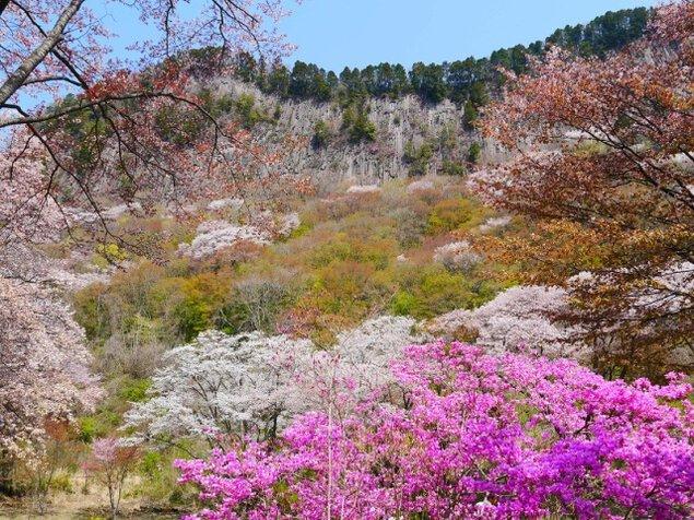 屏風岩公苑 桜ライトアップ