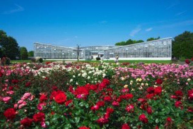 神代植物公園「春のバラフェスタ」<中止となりました>