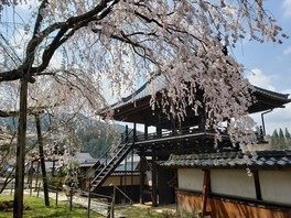 瑞龍寺のしだれ桜