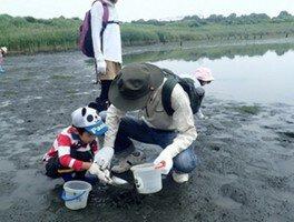 夏休み自然観察会 干潟のカニを調べよう
