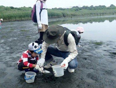 夏休み自然観察会 干潟のカニを調べよう<中止となりました>