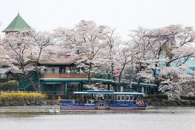 【桜・見ごろ】那須りんどう湖レイクビュー