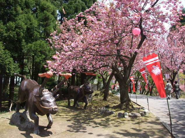 倶利迦羅さん八重桜まつり<中止となりました>