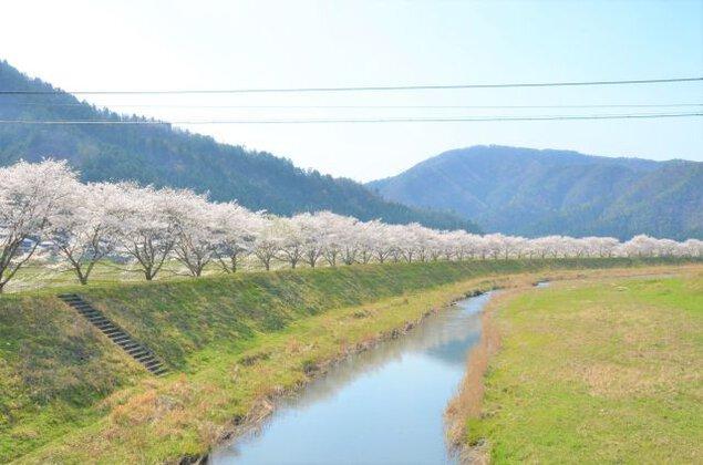 【桜・見ごろ】名田庄 南川堤防桜並木