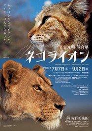 岩合光昭写真展「ネコライオン」