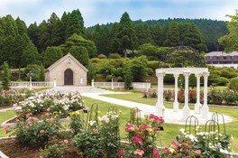 【花・見ごろ】小田急 山のホテル庭園 バラ