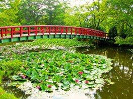 【花・見ごろ】八郎沼公園の睡蓮