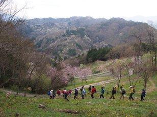 陸郷山桜トレッキング2020<中止となりました>