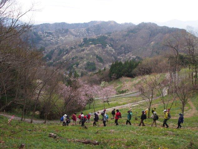 陸郷山桜トレッキング2020