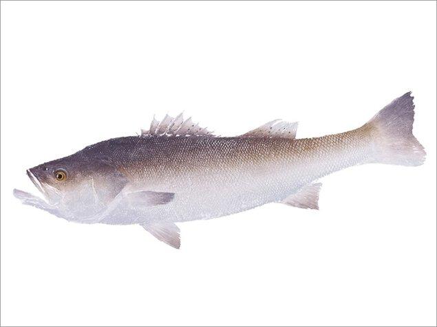 カラーアート魚拓の世界