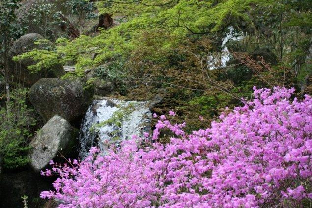 【桜・見ごろ】鬼岩公園