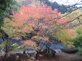 小鳥のさえずりを聞きながら渓谷の紅葉を満喫できる