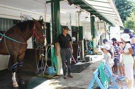 夏休み自由研究相談「馬について学ぼう」