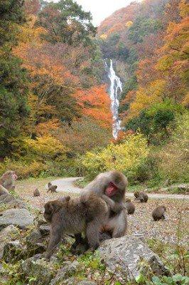 神庭の滝自然公園の紅葉