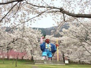 【桜・見ごろ】戸倉宿キティパーク