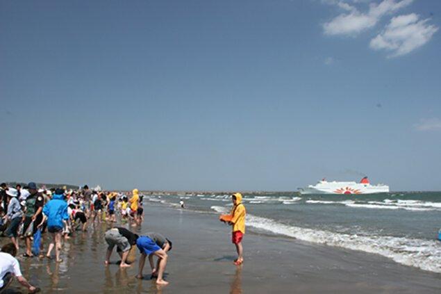 大洗サンビーチ海水浴場の潮干狩り