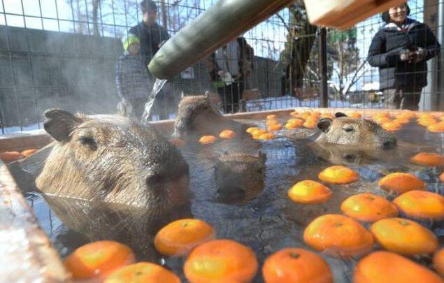 須坂市動物園 カピバラ温泉「華の湯」