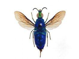 特別展「ハチを知る」