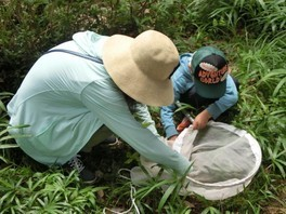 山口県立山口博物館教育普及講座「夏の昆虫採集と標本作り」