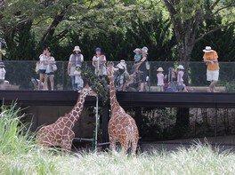動物園で折り鶴を折ろう
