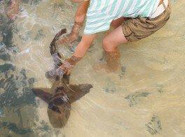 ふれてみて サメと海の生きものたち