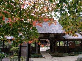 大雄寺の紅葉