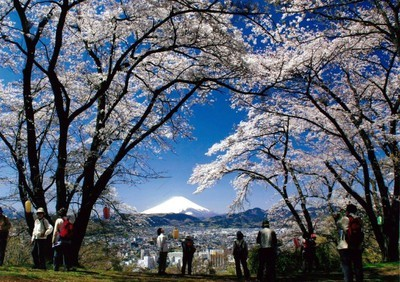弘法山公園の桜