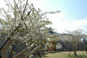【桜・見ごろ】甲府市歴史公園