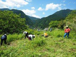 草刈りボランティア体験