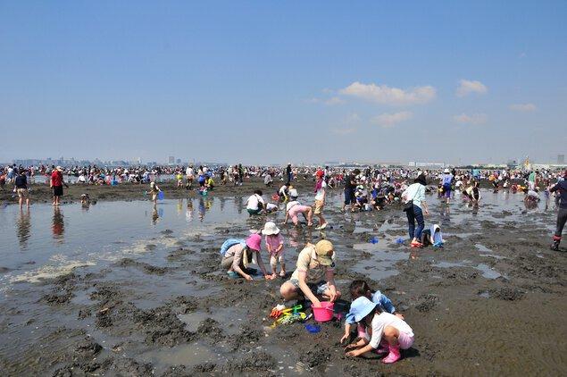 ふなばし三番瀬海浜公園 潮干狩り