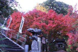 円興寺の紅葉