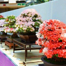 花季さつき展覧会