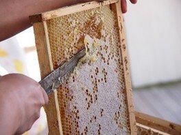 採蜜体験&しぼりたてハチミツ試食会