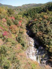 【紅葉・見ごろ】轟の滝