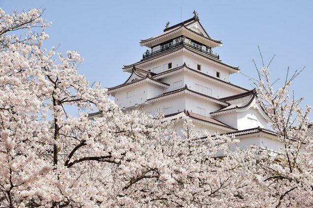 鶴ヶ城公園の桜